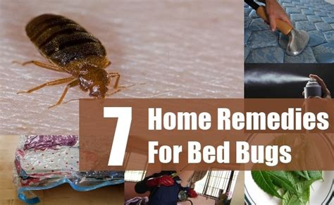 home remedies to kill bed bugs 28 images organic way
