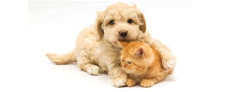 dogs that get along with cats cheap pet meds total pet supply
