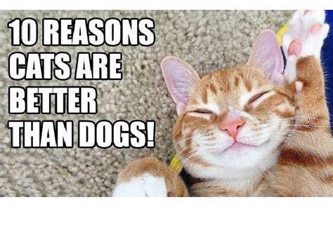 2 ragdolls better than 1 top 10 reasons why cats rock better than dogs kitticats