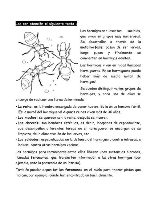 poemas de insectos para ninos textos literarios para preescolar rachael edwards