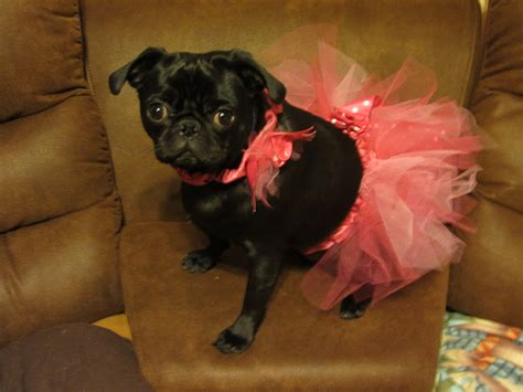 pug boutique realistic pug puppy wearing pink tutu woof boutique plush doll figure ebay
