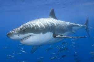 white shark long hairstyles