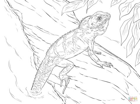 realistic lizard coloring pages realistic chinese water dragon download coloring pages