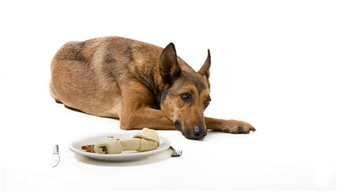 how to get a puppy to eat how to get a with no appetite to eat top tips