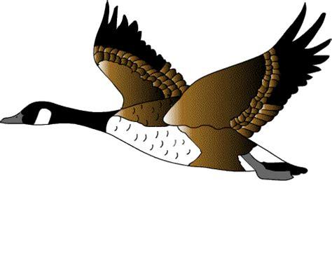 wild birds unlimited 10 wild bird myths debunked