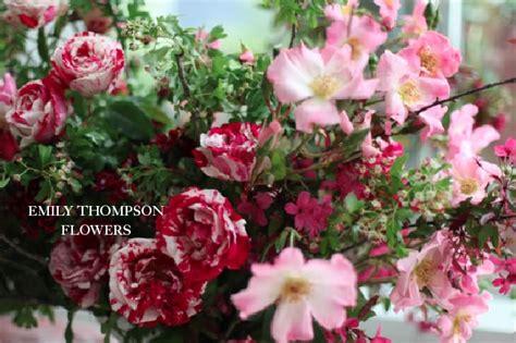 thompson florist photos for emily thompson flowers yelp