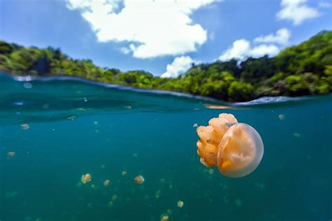 unique holiday  natural beauty palau outdoor tourism  spring adventure diy craft
