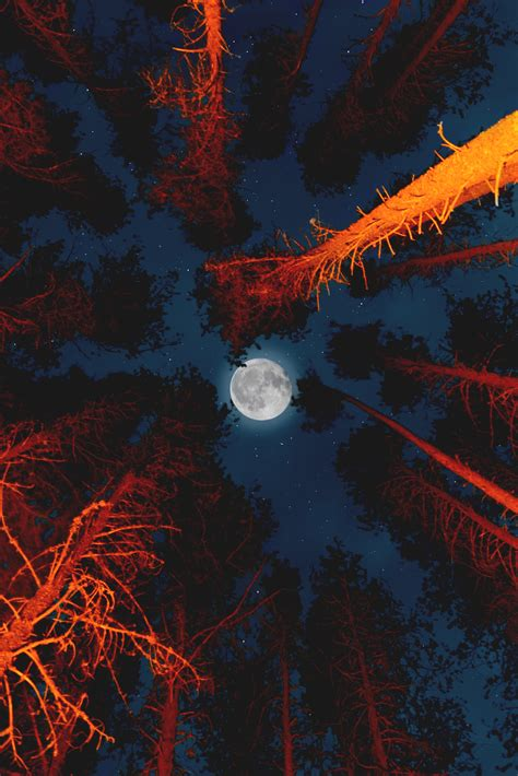 wallpaper moon night forest campfire hd photography