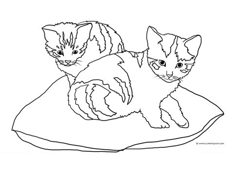 two cats coloring page cat coloring pages