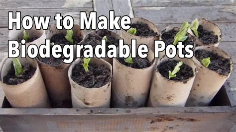 biodegradable plant pots homemade seed