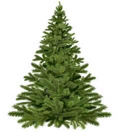 tree picks christmas tree pick up borough of fanwood
