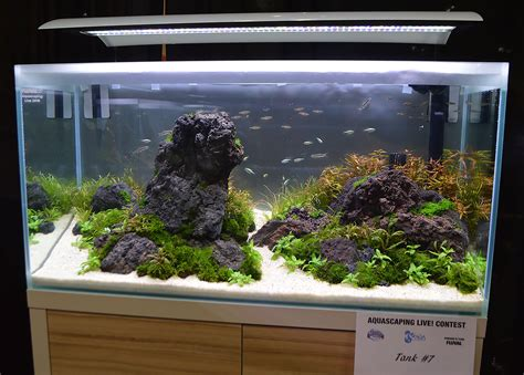 aquascaping live 2016 large tank entries amp results