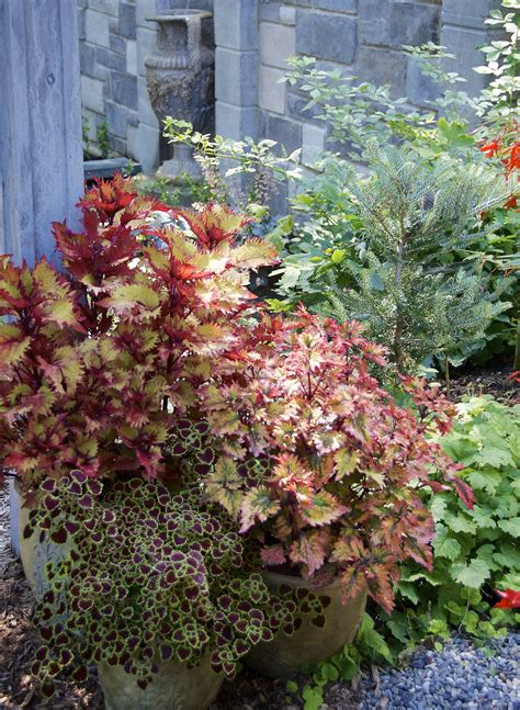 container gardening tips for beginners ten container gardening tips for beginners