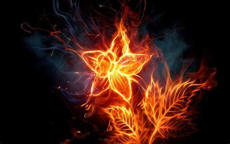 imagenes geniales fondo de pantalla fondo pantalla flor de fuego