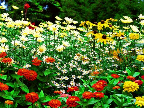 Gardens Of Flowers Flowers For Flower Flowers Sceneries Wallpapers