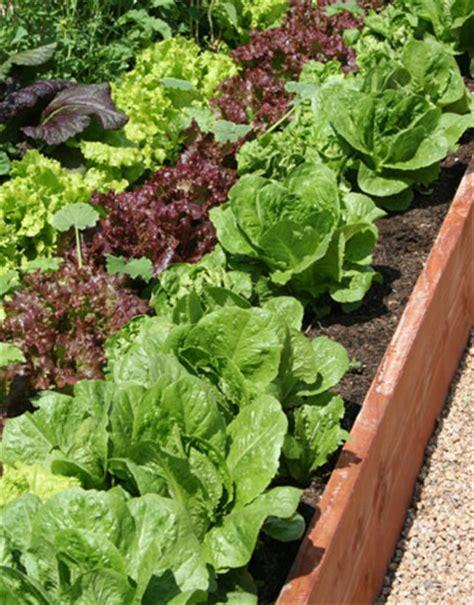 Growing Vegetables In Full Sun Sun Vegetable Garden