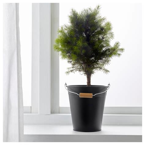 Black Outdoor Plant Pots Socker Plant Pot In Outdoor Black 2 5 L Ikea