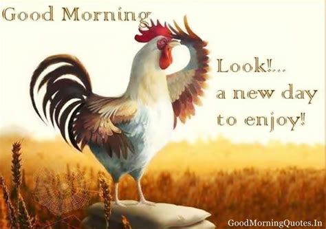 new day images morning look a new day to enjoy pictures photos
