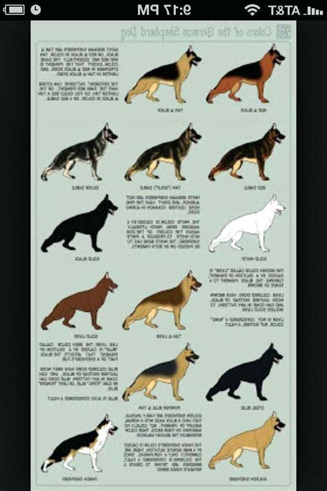 shepherd color german shepherd color chart pets and dogs