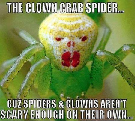 Sad Spider Meme - best 25 spider meme ideas on pinterest funny spider