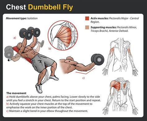 13 best images about chest workout on clean