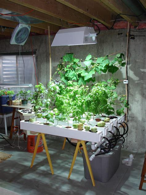 indoor hydroponic garden hid metal halide plant grow
