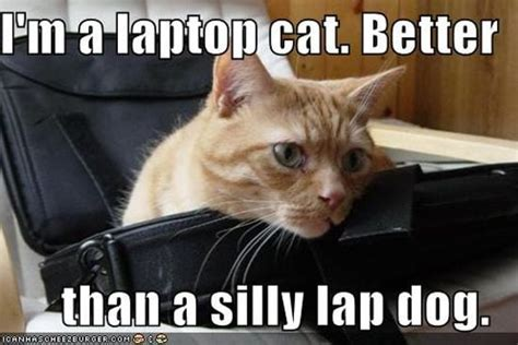 Cat Laptop Meme - cats and dogs playing with computers you know who wins
