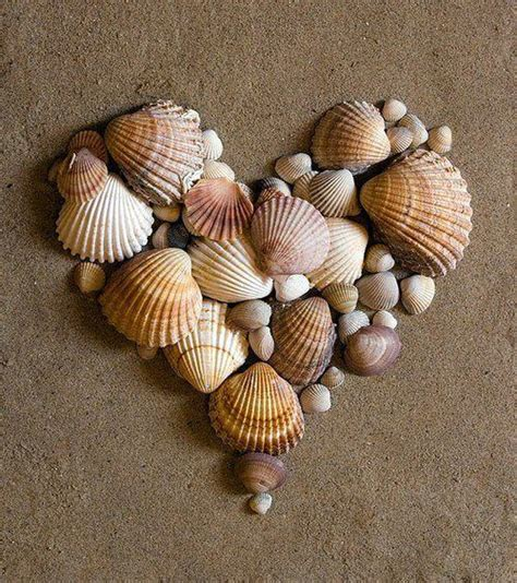craft projects with shells 25 best ideas about sea shells on shells