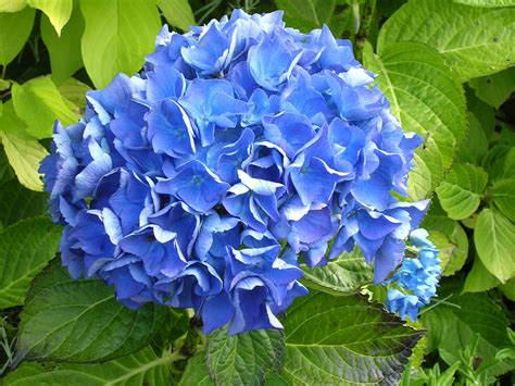 Blue Flower 14092 2048x1536 Px Hdwallsource Com Blue Garden Flower