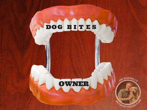 biting owner bites owner how to fix it jim burwell s petiquette
