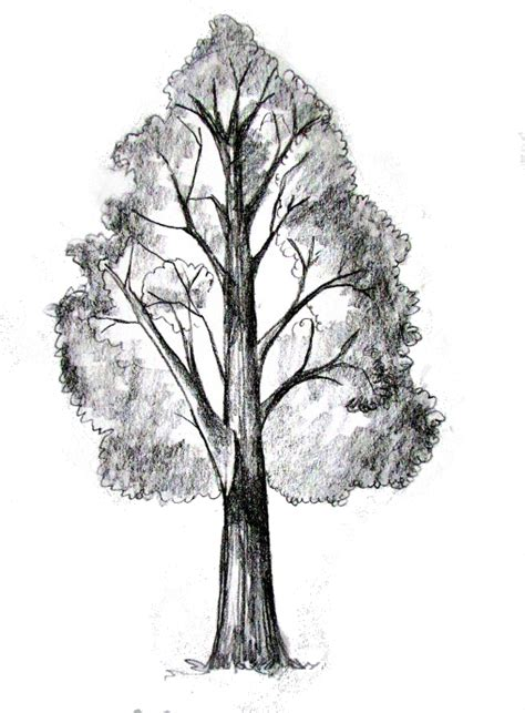 doodle draw tree how to draw a tree tutorial drawing painting how to