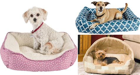 dog bed sores dog bed sores 28 images 5 common causes of hair loss