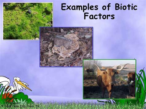 exle of biotic factors ecosystems biotic and abiotic factors