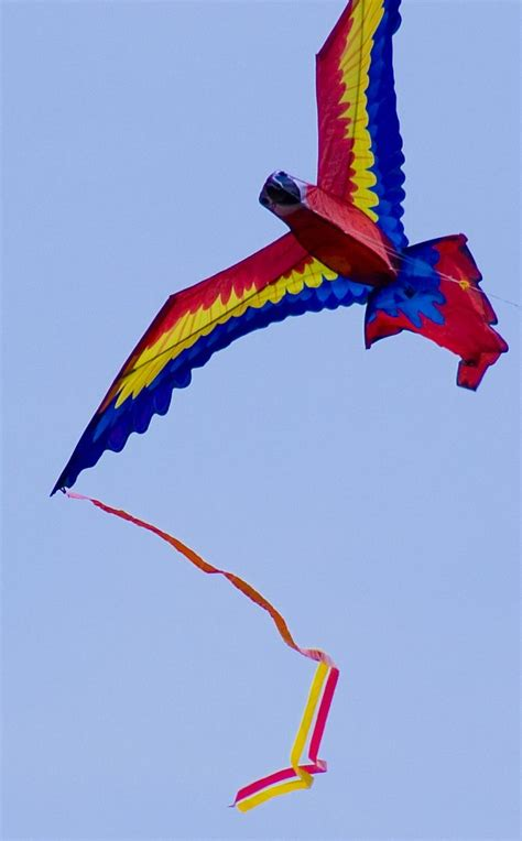 best light wind kite 2017 78 best images about bird kites on pinterest parrots