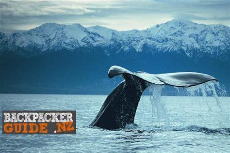 8 Wildlife Activities in New Zealand   Backpacker Guide