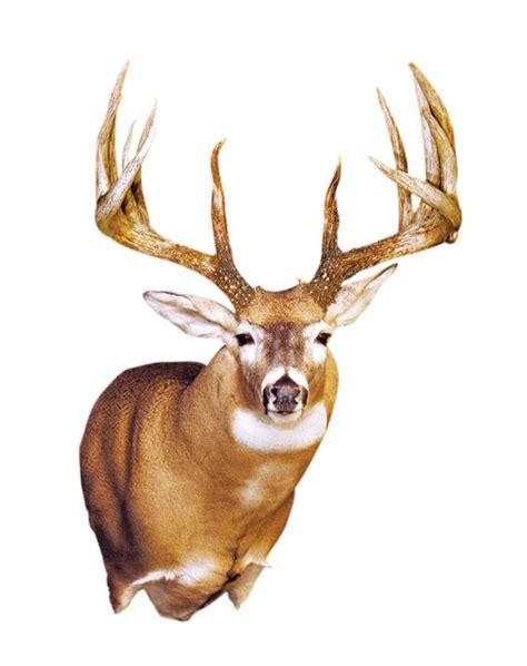 king buck the king buck