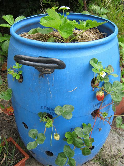 Strawberry Barrel Planter by Strawberry Barrel Flickr Photo