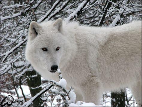 2048 Winter wolves