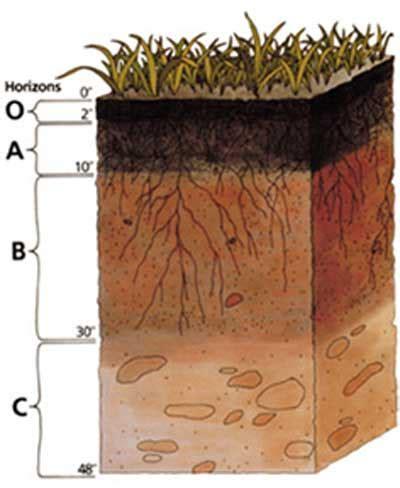 organic soil for vegetable garden best organic soil mix for vegetable garden