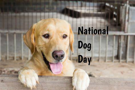when is international puppy day national day in 2017 2018 when where why how is celebrated