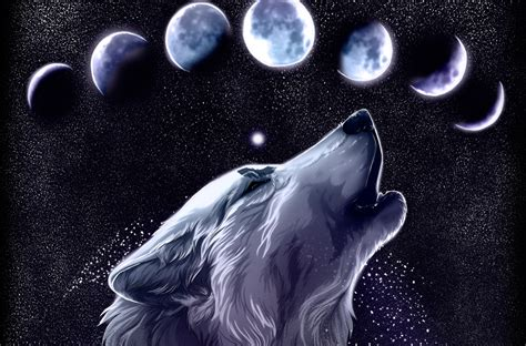 wallpaper laptop wolf cool black wolf wallpaper wallpapersafari