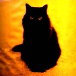halloween black cats halloween black cat related keywords amp suggestions
