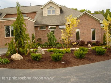 weeping evergreen landscape traditional with