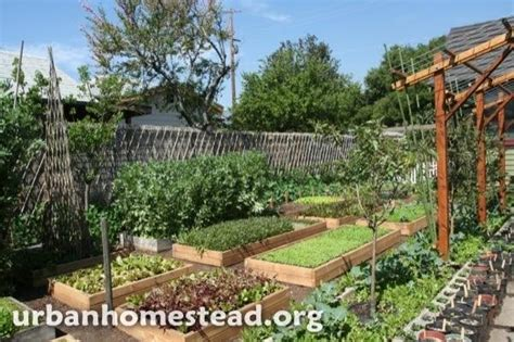 Family Grows 6000 Lbs of Food on 1/10th Acre Urban Farm