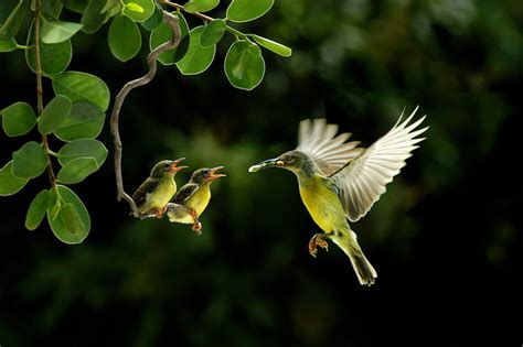 humming bird feeding babies source of inspiration