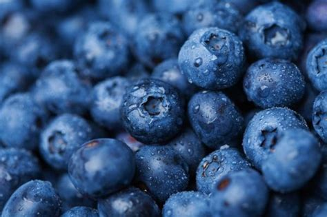 wallpaper blue food how to pick a blueberry variety for your edible landscape