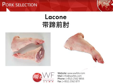 latex tutorial portuguese lacone products hong kong lacone supplier