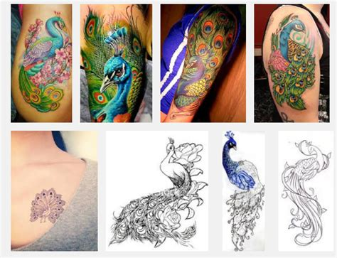 small peacock tattoo designs 15 best peacock designs and meanings styles at