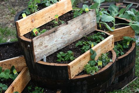 Strawberry Barrel Planter by Tiered Whiskey Barrel Strawberry Planter Diy