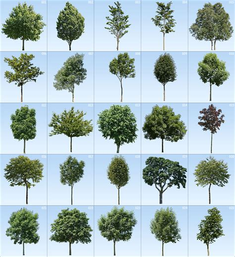 Kitchen Lighting Collections 100 cut out tree textures for archviz amp cgi s